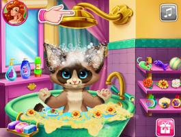 Banho do Gato - screenshot 1